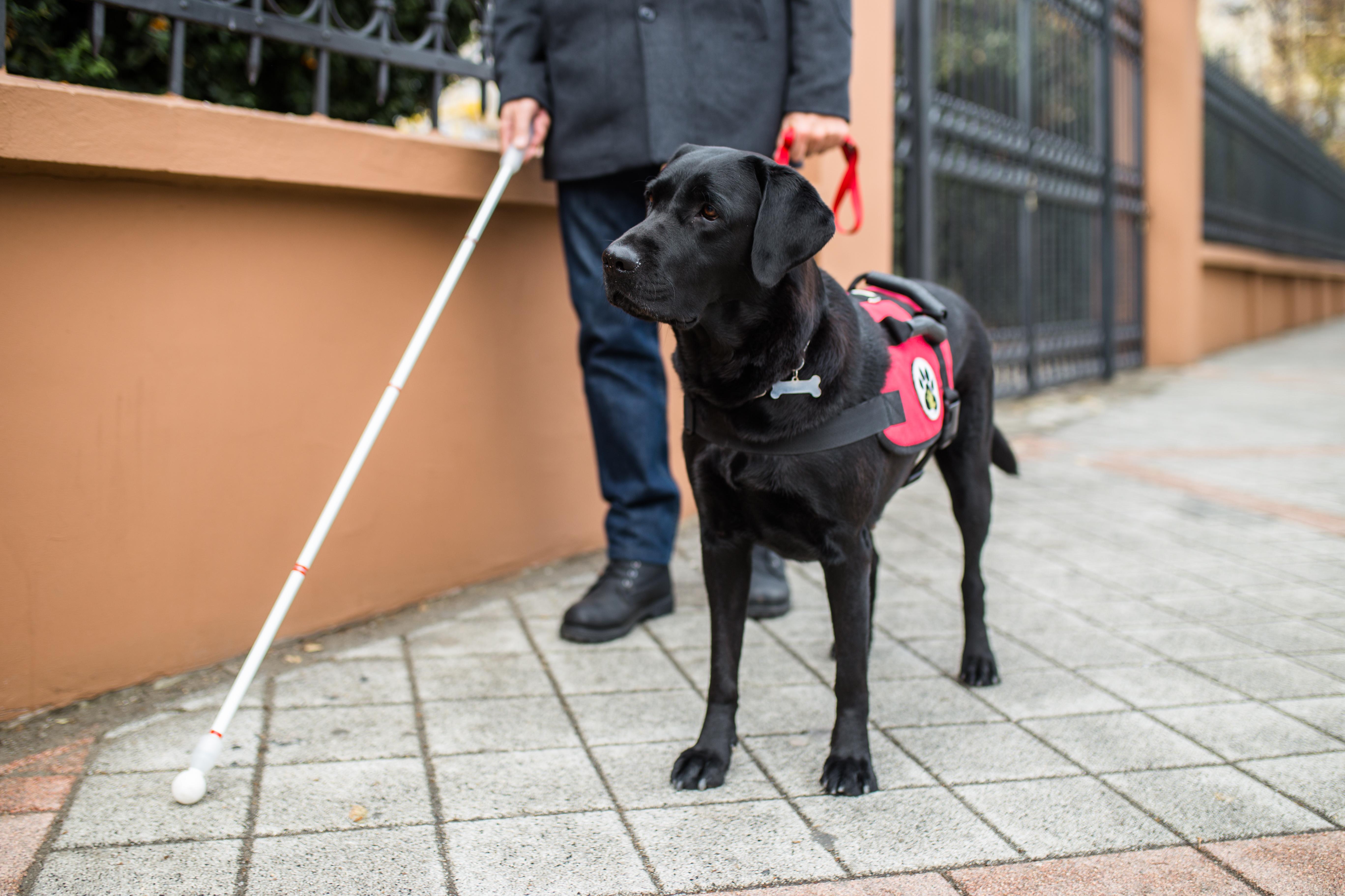 身体障害者補助犬法と管理規約について